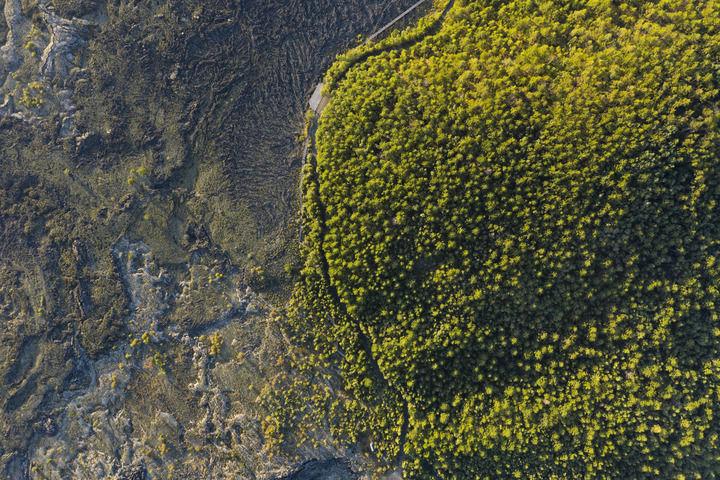 五大连池世界地质公园老黑山附近的熔岩台地(8月31日摄,无人机照片)。新华社记者 谢剑飞 摄
