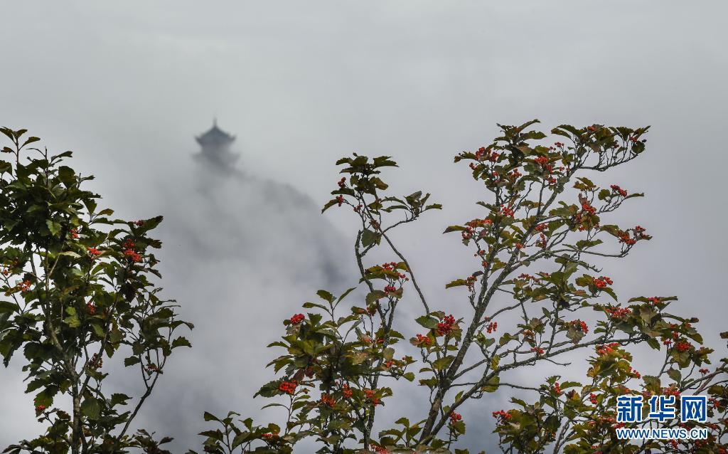 9月2日在龙头山景区拍摄的野山楂树。位于川陕交界的陕西省汉中市南郑区龙头山旅游景区四季云雾缥缈,若隐若现的群山林海宛如一幅幅淡雅的中国画。新华社记者 陶明 摄