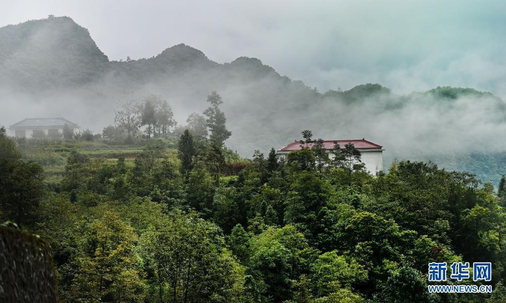 9月2日拍摄的烟雨中的龙头山景区。位于川陕交界的陕西省汉中市南郑区龙头山旅游景区四季云雾缥缈,若隐若现的群山林海宛如一幅幅淡雅的中国画。新华社记者 陶明 摄