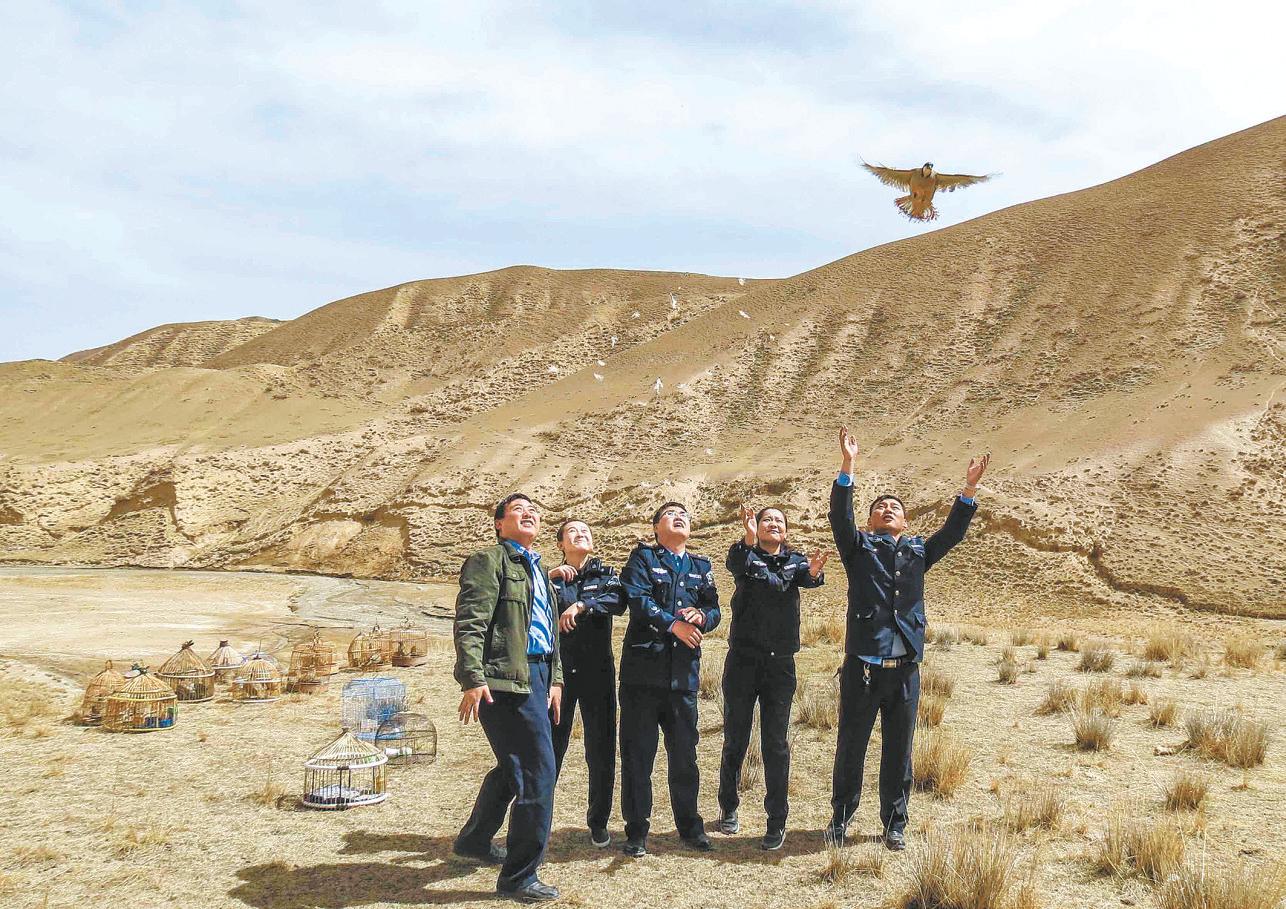 森林公安将救助的鸟类放回大自然。