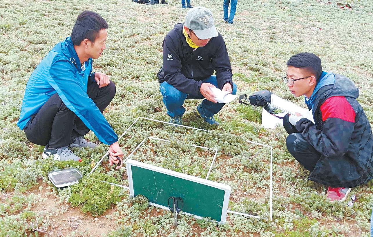 科研人员进行植物样方调查。