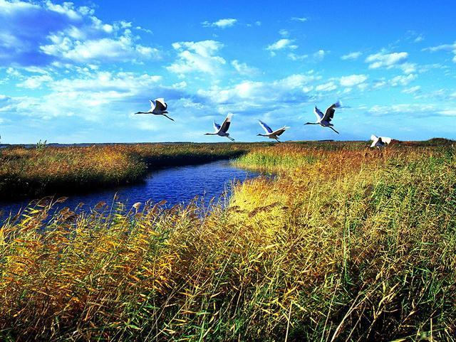齐齐哈尔扎龙自然保护区秋季观鸟