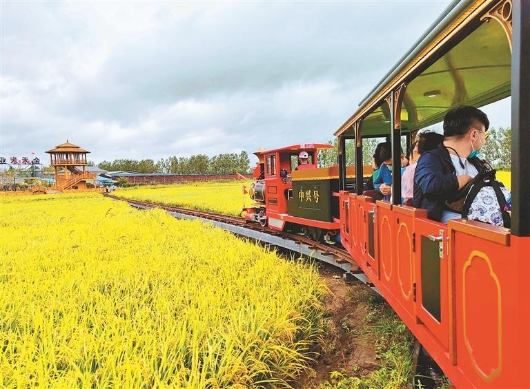 中兴村稻田小火车。