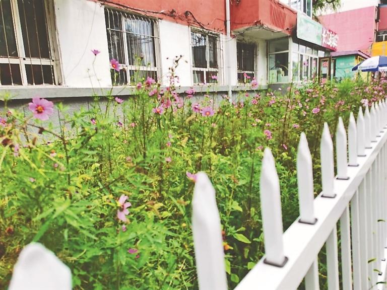 小区里的百米花街。 图片由受访单位提供