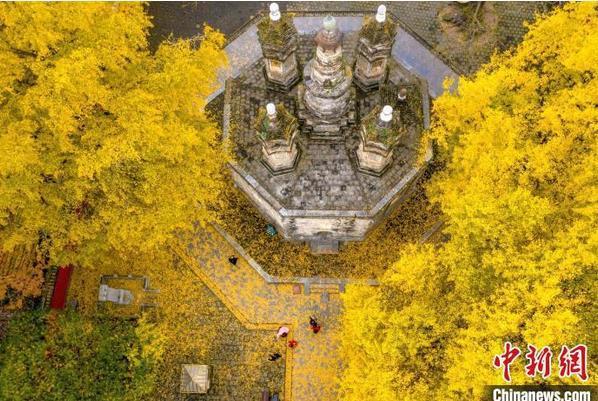 2020年11月30日拍摄的位于襄阳市襄城区广德寺院内古银杏树(资料图) 杨东 摄