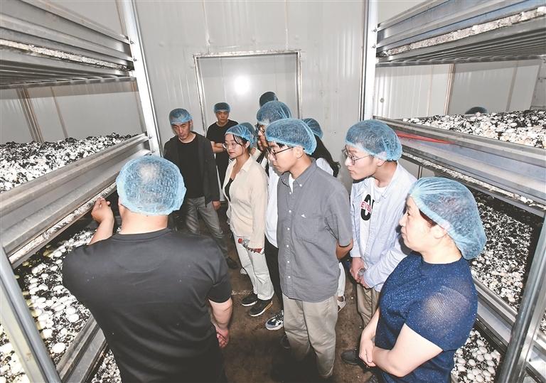 哈工大穆棱市政务实习生参观双鲍菇种植基地。