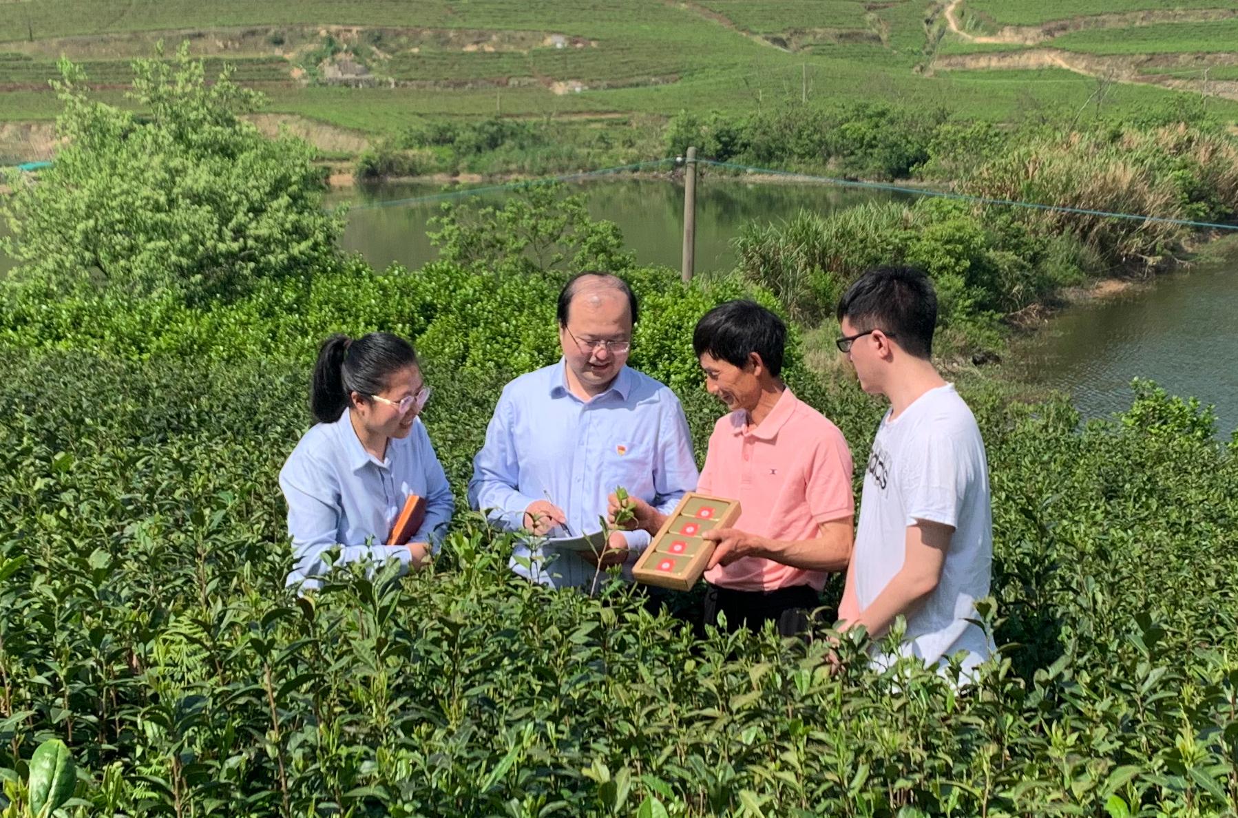 图为农行白峰支行工作人员向茶农师傅了解茶叶产销情况(郭星雲 摄)
