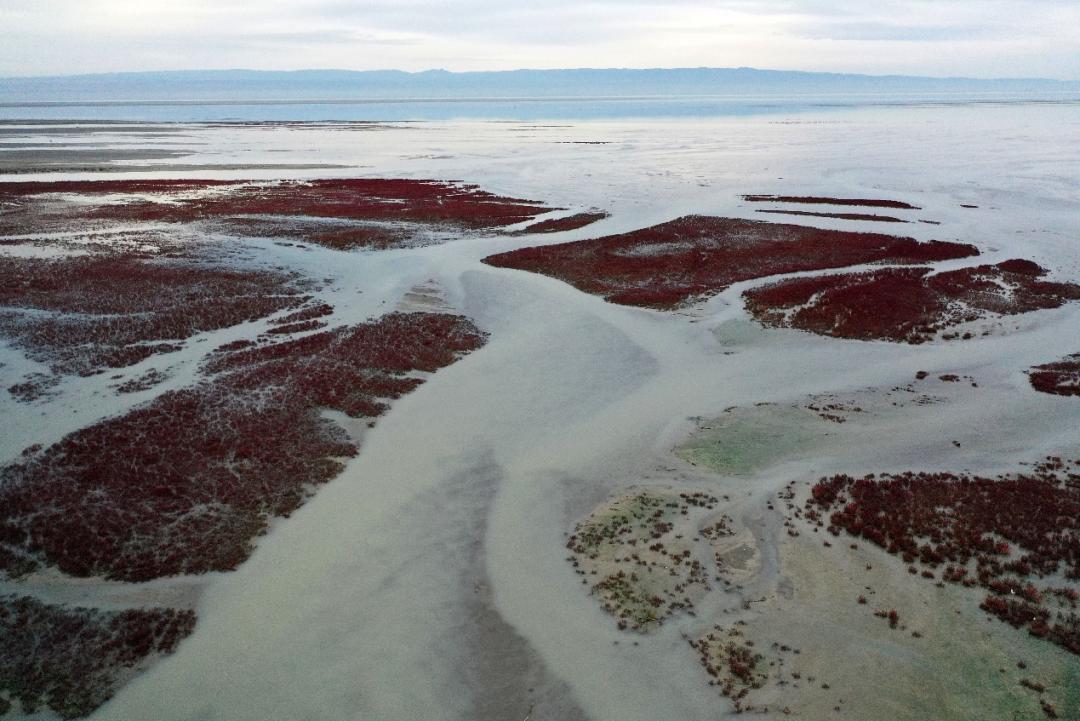 准噶尔盆地西部的艾比湖红海滩