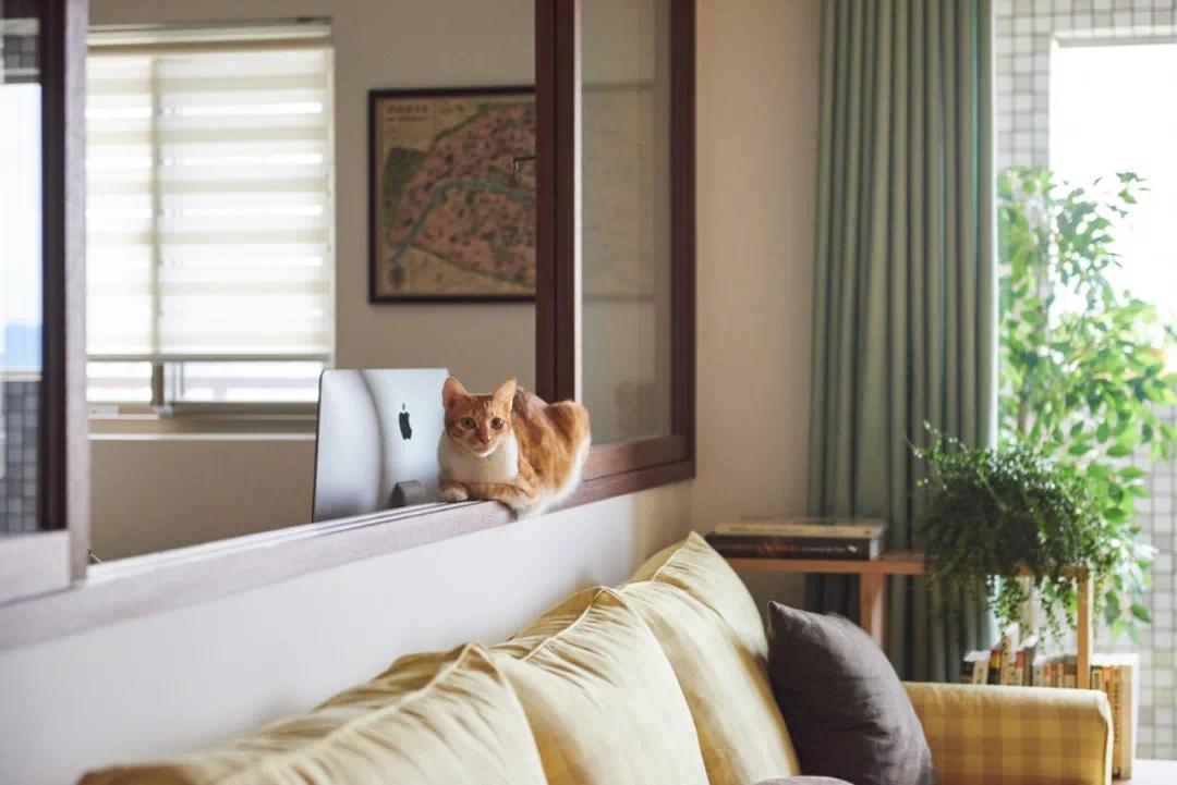 89㎡竟然4房改1房,兩人兩貓的極樂世界,就是這么任性!