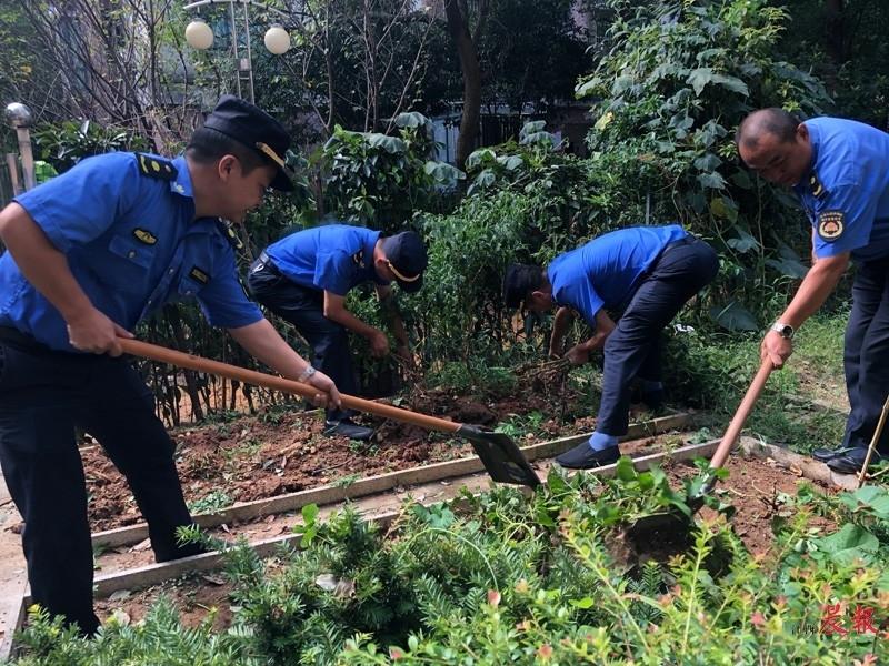 """▲城管队员正在清理""""私家菜园""""。"""