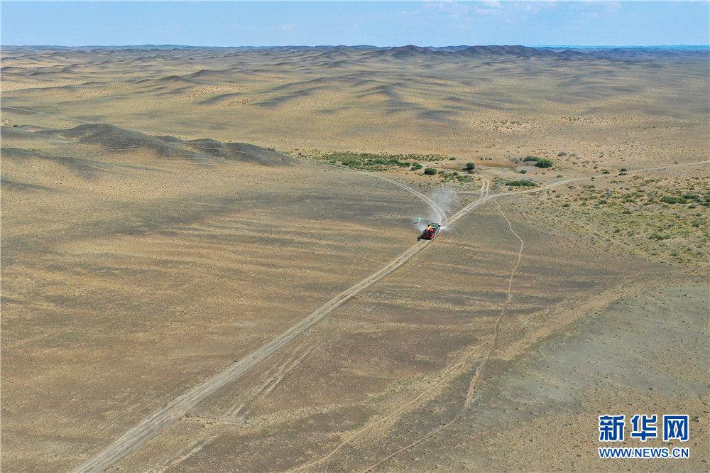 运载野马的卡车进入新疆卡拉麦里山有蹄类野生动物自然保护区(9月1日摄,无人机照片)。新华社记者 丁磊 摄