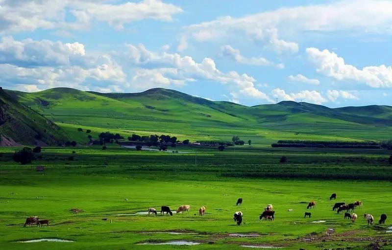 科爾沁草原上的牛肉干,不干、不硬、越嚼越香!根根入味鳳凰網凰家尚品