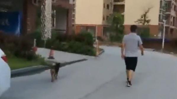 宠物狗散养扰民 业主称两小孩出电梯差点被扑倒