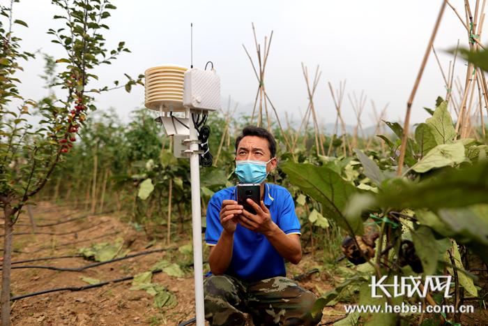 技术员吴杰在田间用手机APP校准温度、湿度传感器,这种传感器遍布各个地块,能实时感知土壤和空气指标并自动无线回传。王爽 摄