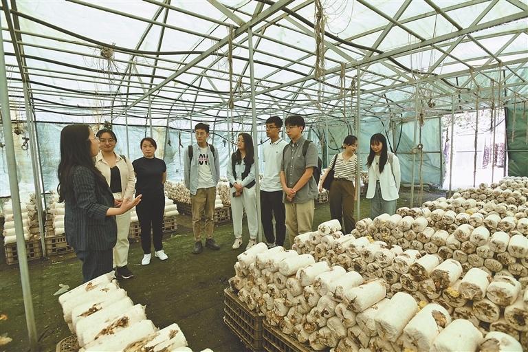 哈工大穆棱市政务实习生参观木耳种植基地。