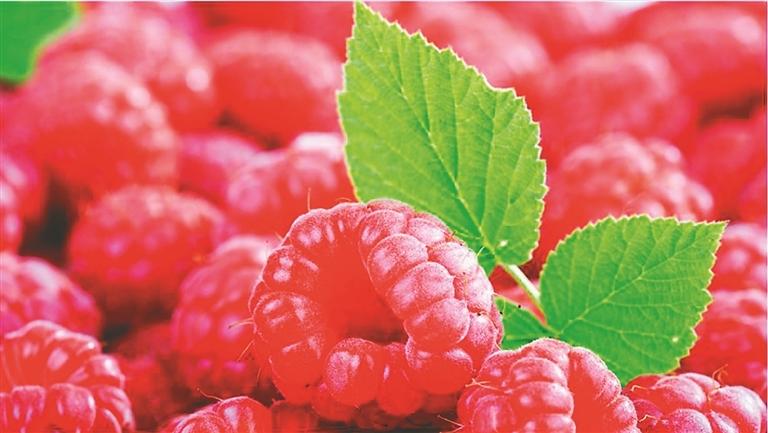红树莓娇艳欲滴。