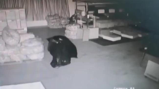 """""""行走""""的黑色塑料袋 真当警察找不到你?"""