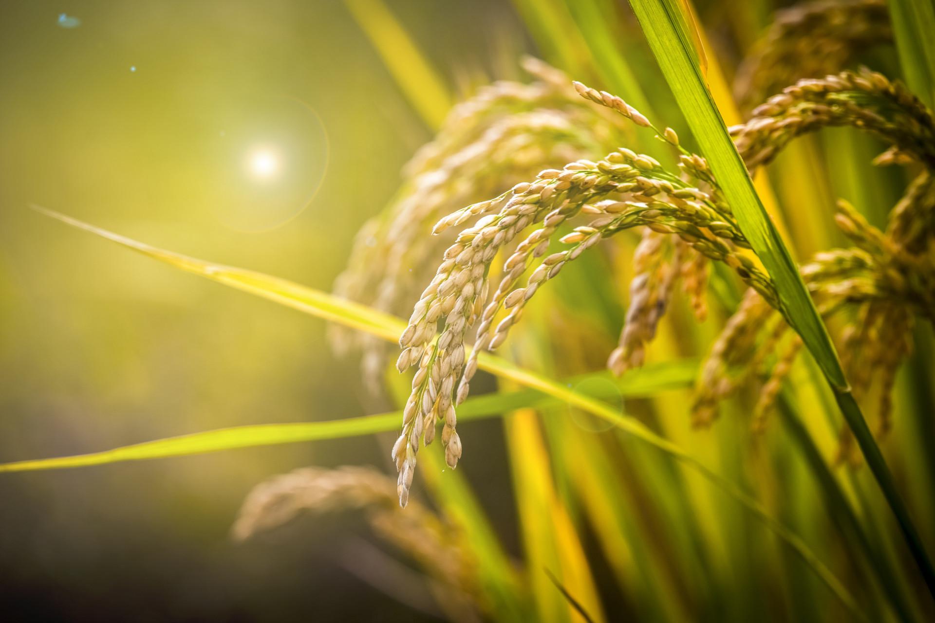 GDP迈上2万亿台阶的苏州,如何解码农业发展?