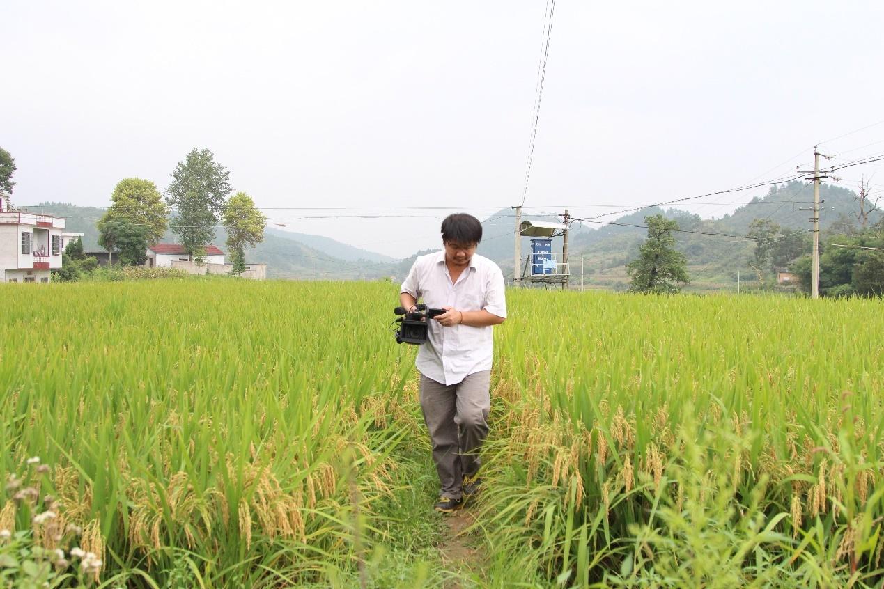 蒋能杰穿过稻田,记录乡村。