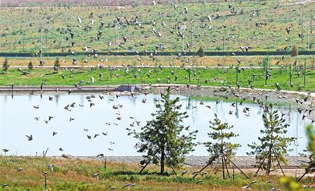 成群的野鸽子在河边翩翩起舞