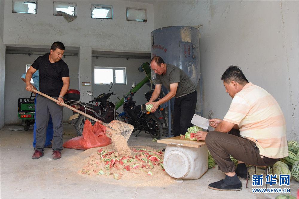 """在新疆野马繁殖研究中心,工作人员为野马制作""""西瓜解暑餐""""(8月10日摄)。新华社记者 丁磊 摄"""