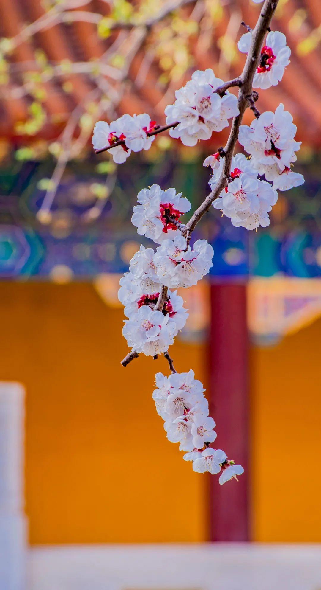 图片来源:凤凰网佛教 摄影:王文菊