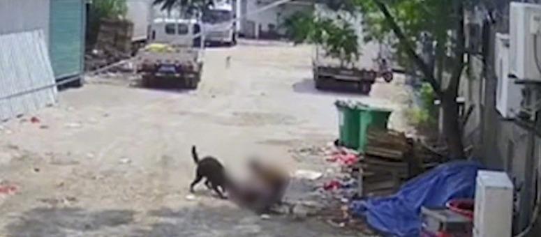 触目惊心!一老人街上被狗撕咬身亡 肇事犬仍然在酒楼养着