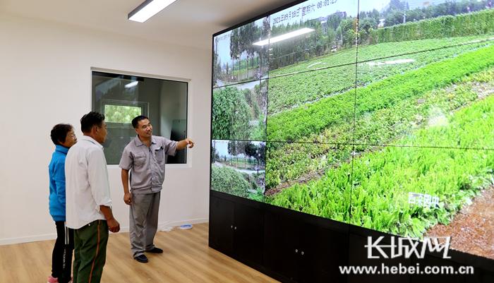 工作人员用智慧农业大数据中心的监控功能查看作物长势,该系统还可以对田间远程喊话、播放音乐等。王爽 摄