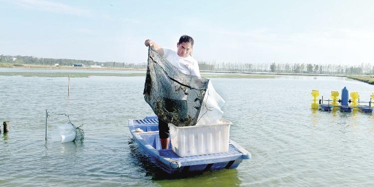 阜阳:螃蟹肥美市场俏