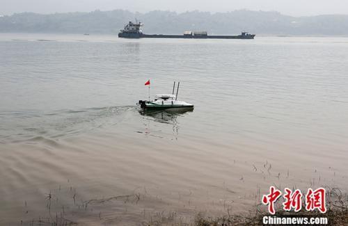 """中国生态环境部日前在重庆组织开展了长江入河排污口试点现场排查,利用无人机、无人船、管道机器人等现代科技""""利器"""",以""""天地""""结合、""""人机""""互补的方式,进行一场生态环境领域的""""水陆空""""三军大会战。图为利用无人船对长江水下排污口进行探测。<a target='_blank' href='http://www.chinanews.com/'>中新社</a>记者 阮煜琳 摄"""