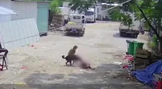 一老人街上被狗撕咬身亡