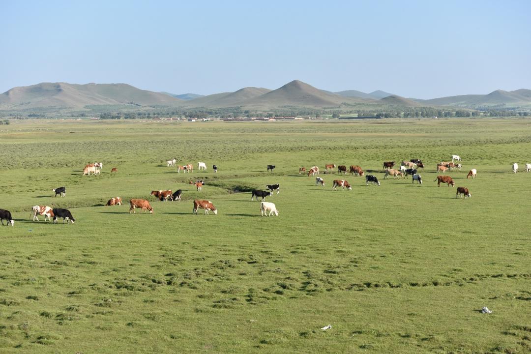 广袤的内蒙古草原