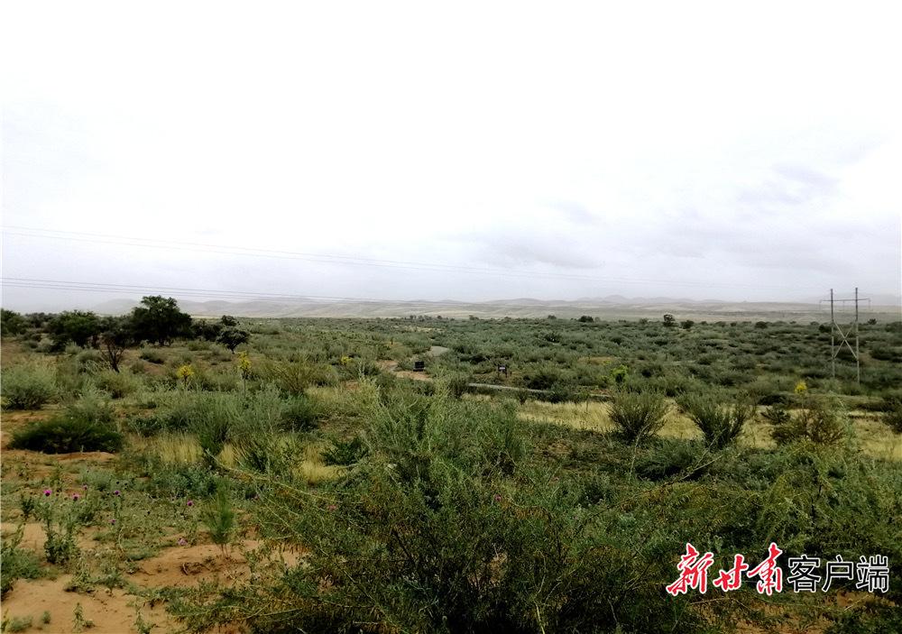 甘肃武威古浪县八步沙林场(资料图)