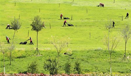 公路边绿草如茵,工人们正在修剪草坪。