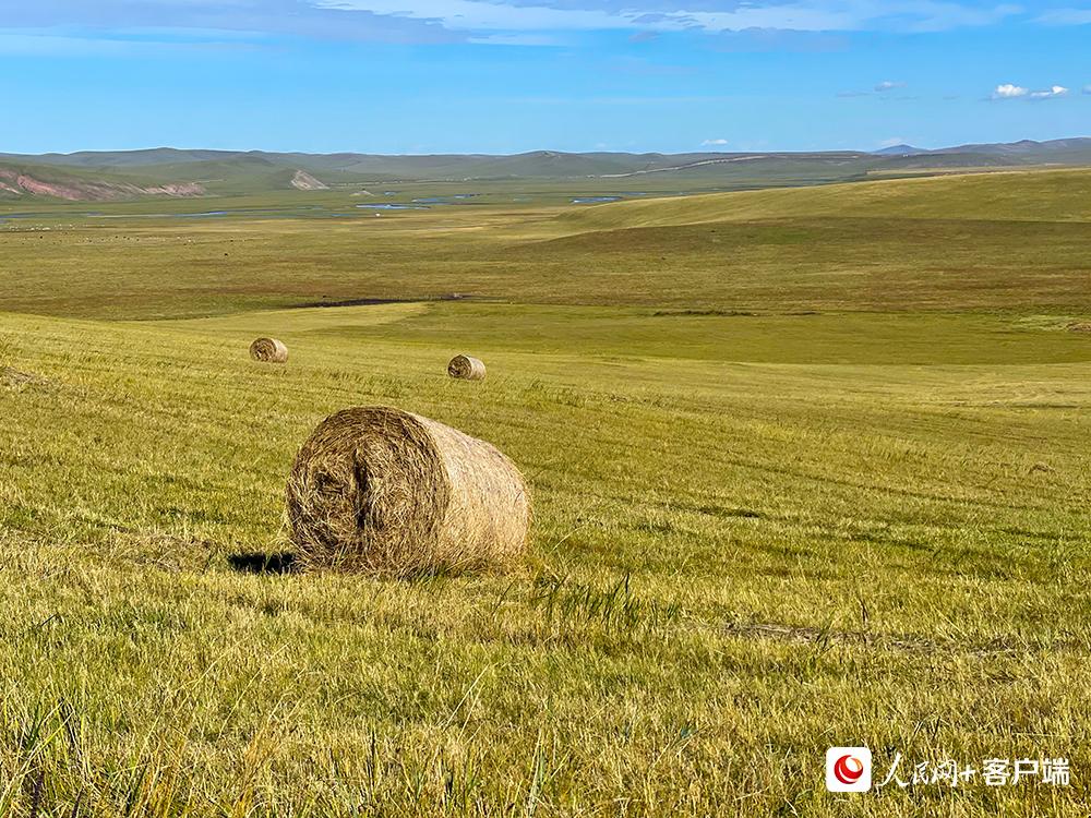 9月17日,正值牧草丰收季,草原上随处可见已打成捆的草垛。人民网记者董丝雨 摄