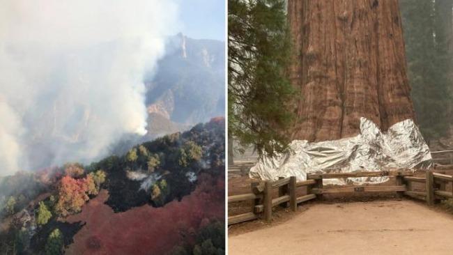 """美国加州山火肆虐 巨型红杉穿上""""防火衣"""""""