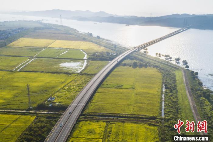 在金色的水稻、波光粼粼的长江与鄱阳湖、和远山的映衬下,宛如一幅美丽的田园秋色图。 祝兴勇 摄