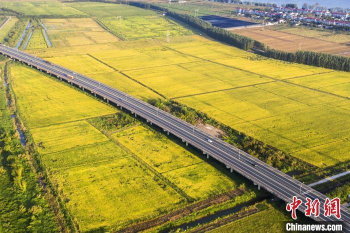 时下,水稻进入了成熟期,到处是一片金黄。从空中俯瞰,九景高速公路如长龙一般,穿越乡村田野。 祝兴勇 摄