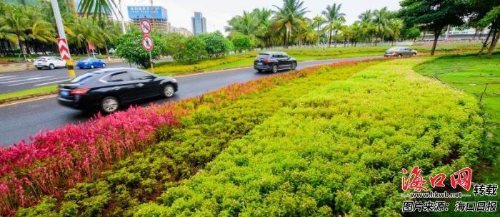 9月23日下午,海府立交桥转盘道路两旁摆满了鲜花,营造出浓郁的节日氛围。陈长宇 摄