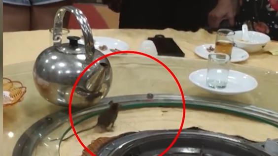 佛山一餐厅惊现老鼠上桌乱窜 顾客:很正常 彼此理解一下