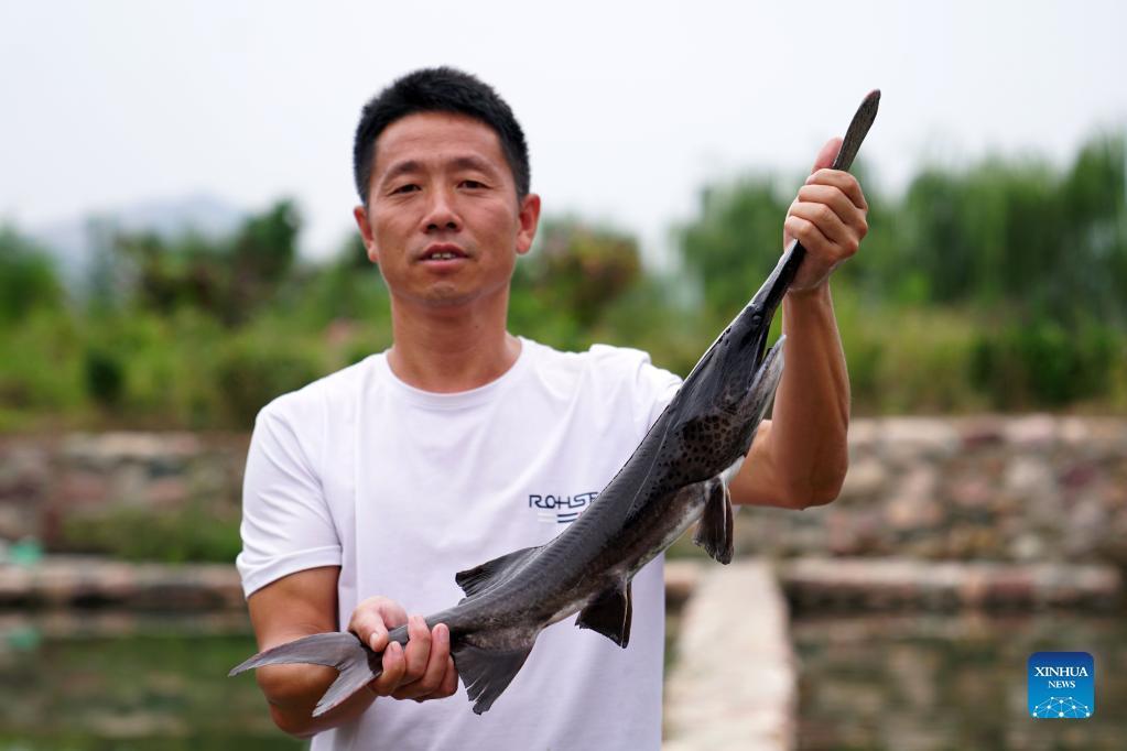 9月16日,河北省邢台市信都区路罗镇鱼林沟村冷水鱼养殖场的工作人员在展示养殖的匙吻鲟。