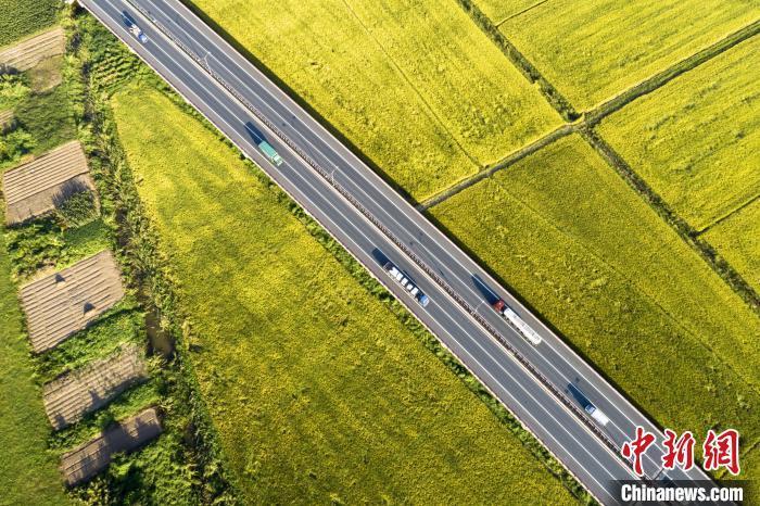 9月24日,航拍江西省九江市濂溪区境内的九景高速公路,穿越金色稻田。 祝兴勇 摄