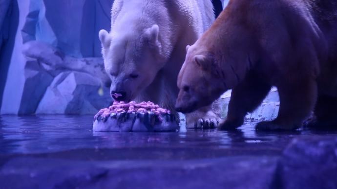 北极熊吃五仁大月饼,海洋动物们也来感受中秋节