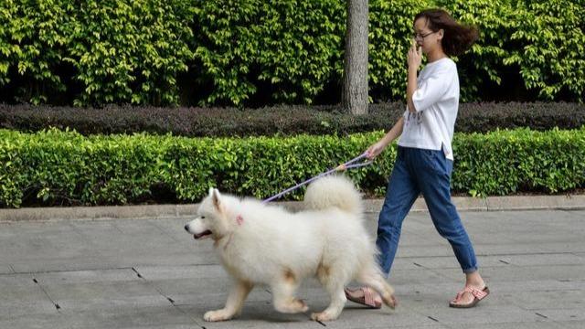 杭州一社區成立動物文明建設協會 為解決養寵糾紛提供新樣板