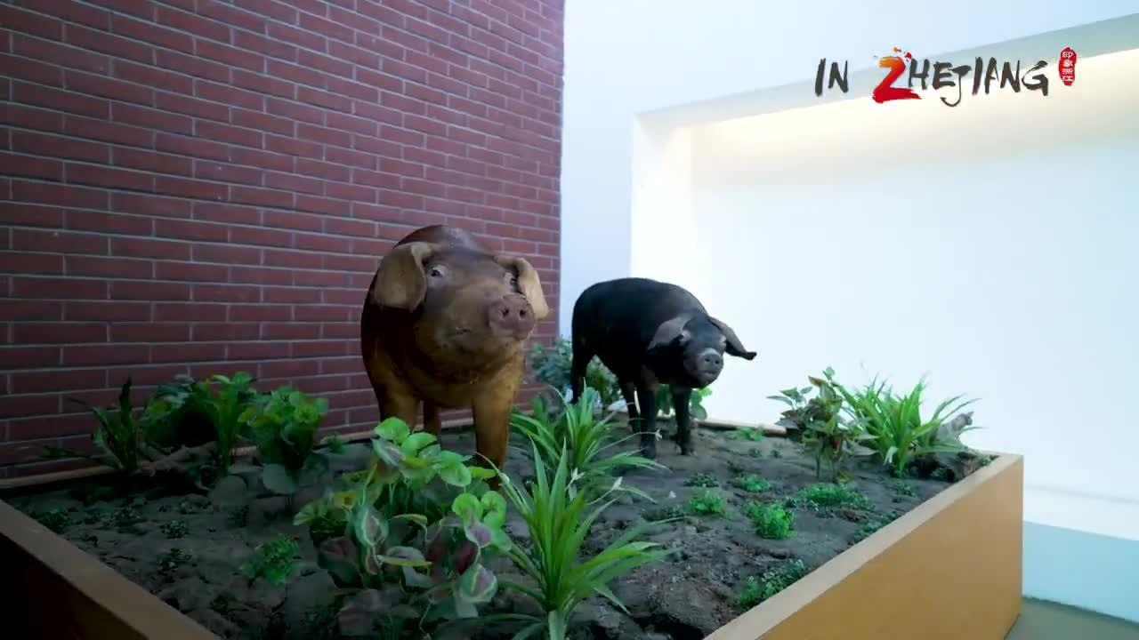"""外国小哥打卡世界互联网大会:这里的机器人会""""养猪"""""""