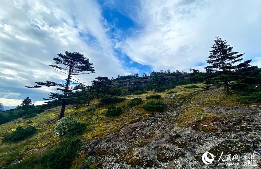 轿子山保护区内风景。 贾翔摄