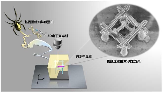图1. 基因重组蜘蛛丝蛋白的3D电子束光刻流程