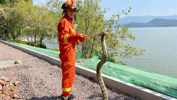 1.5米长大蛇钻进电动车 消防员一把拽出