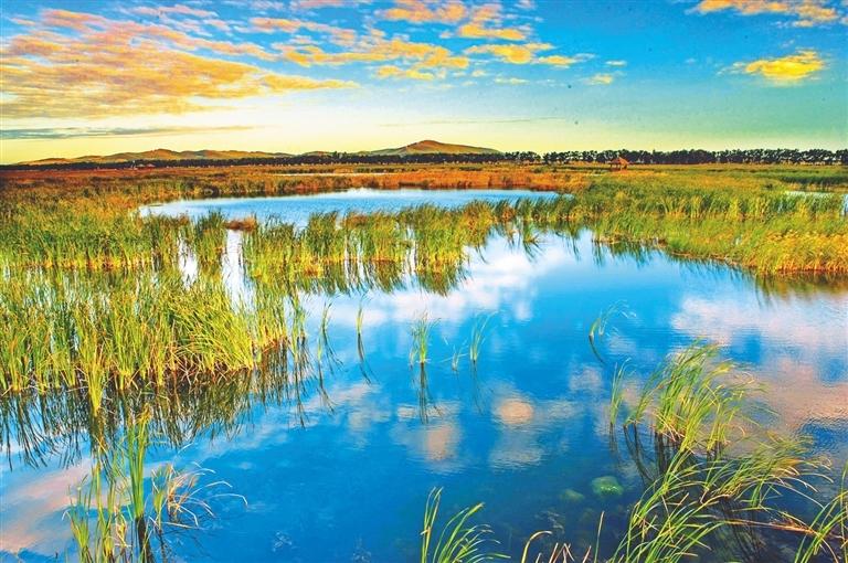 大美湿地。