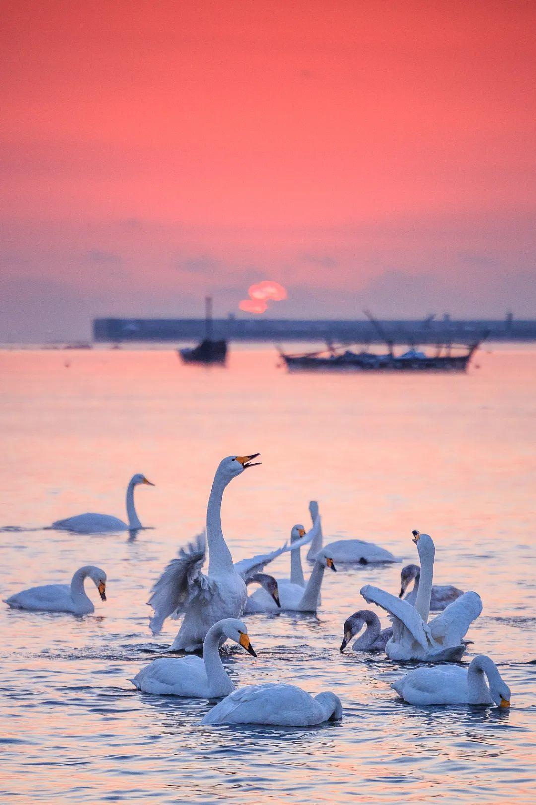 绝美天鹅湖。/视觉中国